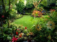 Tropical Landscape Ideas Small Yards | Landscape Design Ideas, Pictures, Remodels and Decor