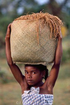 Africa | Girl with rice harvest, Maraonsetra, Madagascar | © Frans Lanting