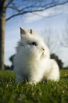 哦,我是只兔子...