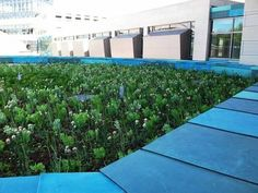 The green roof atop the University of Iowa's new Pappajohn Biomedical Discovery Building is seen. The multi-level gardens feature a mix of sedums that will provide sustainability, aesthetic and social benefits, project leaders say.