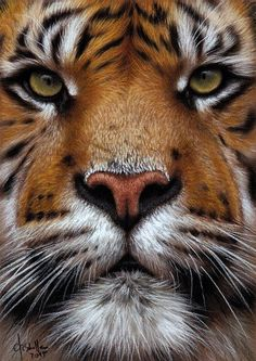 Tiger Close Up, pastel painting by Christina Schulte