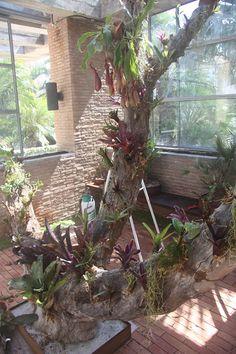 Montajes y decoración con bromelias - Unique Plants, Air Plants, Home Projects, Terrarium, House Plants, Orchids, Succulents, Tropical, Backyard