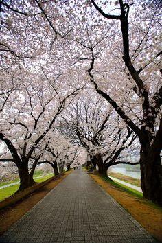 【道 路 Way】 miizukizu:Kyoto, Japan. Ur Beautiful, Beautiful Places, Tree Tunnel, Walk This Way, Tokyo Japan, Kyoto Japan, Ansel Adams, World Of Color, Pathways