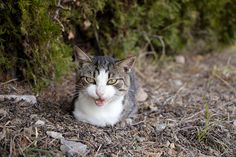Cats, Blog, Wordpress, Animals, Pet Dogs, The Great Outdoors, Animales, Gatos, Animaux