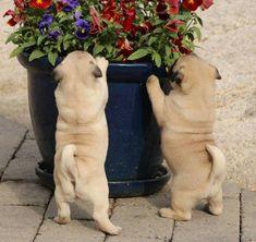 wiggle wiggle, flowers ;-)