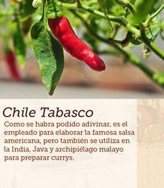 #chile #tabasco #peppers #cocinasdelmundo #comida