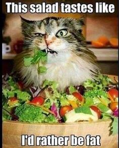 This salad tastes like I's rather be fat.