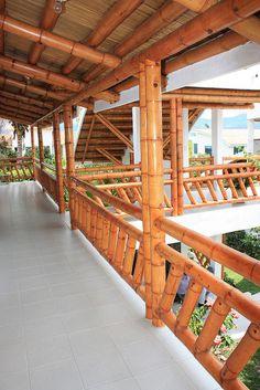 BAMBÚ GUADUA | Flickr: Intercambio de fotos