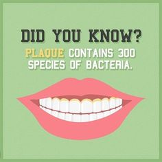 Dentaltown - Did you know plaque contains more than 300 species of bacteria? Bacteria constitute a large domain of prokaryotic microorganisms. Typically, a few micrometers in length, bacteria have a number of shapes, ranging from spheres to rods and spirals.