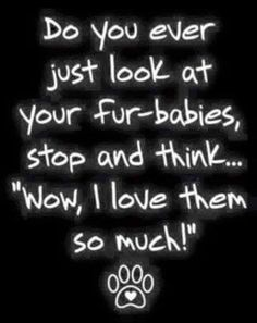 Love my fur-babies! - Funny Dog Quotes - Love my fur-babies! Funny Dog Quotes Love my fur-babies! The post Love my fur-babies! appeared first on Gag Dad. The post Love my fur-babies! appeared first on Gag Dad. I Love Dogs, Puppy Love, Cute Dogs, Crazy Cat Lady, Crazy Cats, Crazy Dog, Yorkshire Terrier, Dogs Tumblr, Jiff Pom