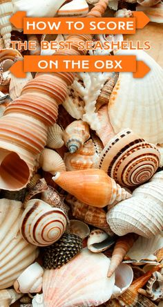 Seasoned beachcombers and shelling connoisseurs know that the Outer Banks of North Carolina is home to some of the best shelling around. Do you? And exactly how do you go about scoring the best seashells on the OBX? We can help you with that!