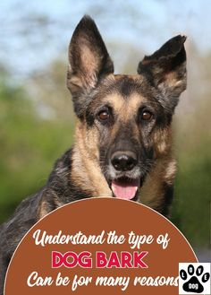 Free Expert Advice On {The Topic Of|The main topic of|The main topics of Dog Barking #dogbarking Stop Dog Barking, Types Of Dogs, Love Pet, Advice, Pets, Free, Dog Types, Tips, Animals And Pets