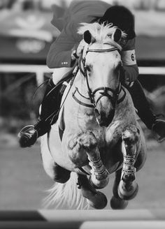 Canadian showjumper Zucarlos dies at 32.