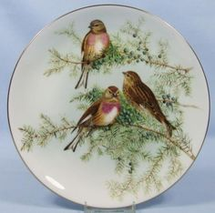 John Gould's Birds of Great Britain: The Linnet - Coalport