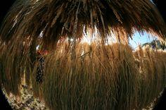 straw put on bamboo