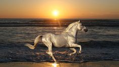 Cavalo, cavalo, garanhão, passeios, natureza, animais, mar, oceano, praia, areia, ondas, água, pôr do sol