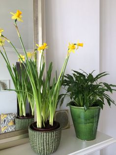 Bringing Spring indoors with these Narcissus on my mantelpiece. Wall Boxes, Window Boxes, Kitchen Plants, Some Ideas, House Plants, Planters, Indoor, Spring, Garden
