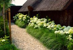 Hydrangea and fountain grass hedge. Hostas would be lovely too