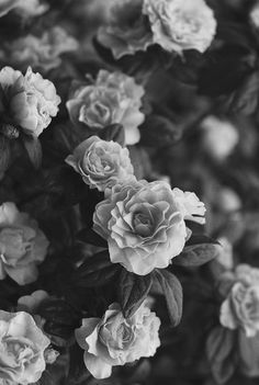 127 best black white flowers images on pinterest in 2018 vintage flowers for iphone wallpaper background find this pin and more on black white mightylinksfo