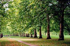 James Park, London - Where my husband proposed! St James Park London, St James' Park, Bitterness, Green Park, Saint James, London Life, Buckingham Palace, Westminster, Suddenly