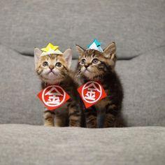 Moshimoshi & Haihai.