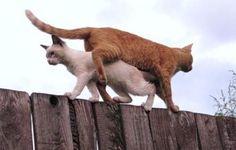 逃げず、戦わず、ただすれ違う猫たち。
