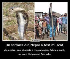 Un fermier din Nepal a fost muscat de o cobra, apoi si acesta a muscat cobra. Cobra a murit, dar nu si Mohammed Salmodin.