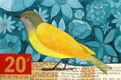 Pretty bird from Geninne