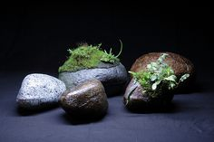 Hygrolon stones by Mikaels orchids - Back for now, via Flickr