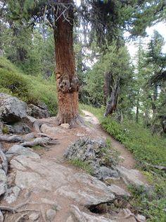 zur Berglalm in Schnals Südtirol