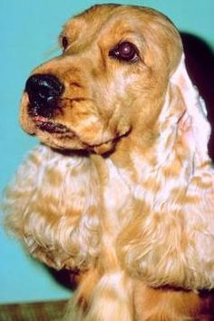 Natural Yeast Infection Bath For Dogs Skin