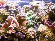 Aquarium Coral Reef Care Tips