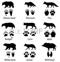 """Find """"wolf silhouette"""" stock images in HD and millions of other royalty-free stock photos, illustrations and vectors in the Shutterstock collection. Wilderness Survival, Camping Survival, Survival Skills, Bushcraft Skills, Animal Footprints, Animal Tracks, Animal Silhouette, Animals And Pets, Wild Animals"""