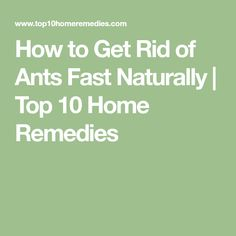 How to Get Rid of Ants Fast Naturally Different Types Of Ants, Ants In House, Peppermint Plants, Yeast Infection Causes, Get Rid Of Ants, Top 10 Home Remedies, Cinnamon Essential Oil, Types Of Houses