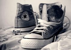 Incredibly Cute Rats Photography by Jessica Florence – DesignSwan.com AHHH CUTENESS OVERLOAD!!!!