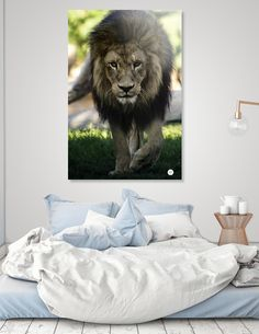 Discover «Lion», Numbered Edition Acrylic Glass Print by José Luis  Vilar Jordán - From 65€ - Curioos