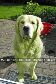Don�t worry though, they don�t always get it right either. | 21 Animals That Will Give You Makeup Goals