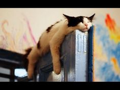 These SLEEPY and CLUMSY CATS and DOGS will make your day - Funny and cute cats and dogs compilation -  #animals #animal #pet #cat #cats #cute #pets #animales #tagsforlikes #catlover #funnycats  Learn how to speak cat! Click HERE for the cat bible! These sleepy cats and dogs will sure make your day with their cuteness and their funny sleepy mood…  🙂 Hope you like our compilation, please... - #Cats
