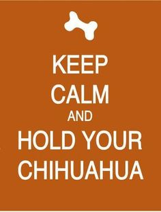 Hold your Chihuahua.