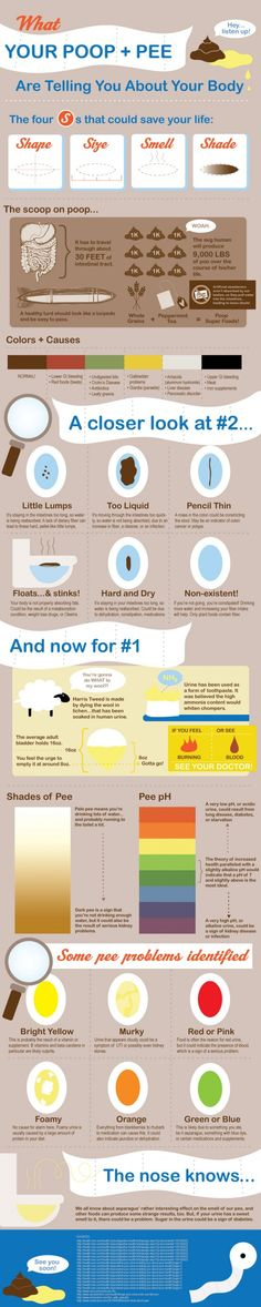 "Have you ever wondered if your poop looked ""normal,"" but were too embarrassed to ask anyone else what their poop looks like? Poop is an important part of health and affects your beauty, as everything in your body works as an interrelated system. Well don't worry, because here is a guide to anything and everything you may have wondered about your pee, and yes, your poop."