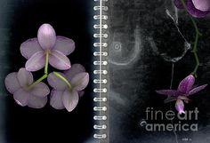 Sweet Triangulation- PhotoGraphic Artistry by Heather J. Kirk www.heather-kirk.artistwebsites.com