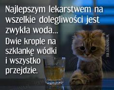 MojaKuchniaMalutka i reszta domu Cat Quotes, Funny Quotes, Funny Memes, Jokes, Weekend Humor, Beautiful Love Pictures, Smile Everyday, Wtf Funny, Man Humor