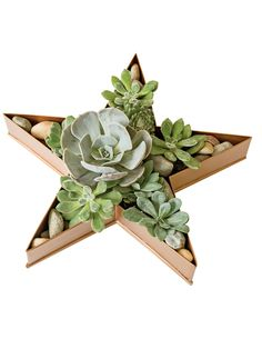 Shallow Planter: Metal Star Dish Planter   Gardeners.com