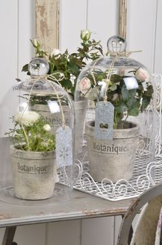 Small Plant Dome Display Decorative Clear Glass Cloche Bell Jars from Brand:Glasszhao; The Bell Jar, Bell Jars, Cloche Decor, Deco Boheme Chic, Decoration Vitrine, Bella Rose, Deco Floral, Decorated Jars, Romantic Homes