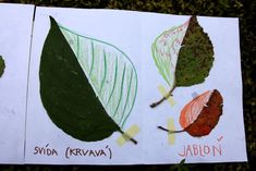 Listová leporela | Učíme venku Leaf Crafts, Learn Art, Nature Journal, Nature Study, Art Education, Montessori, Preschool, Pastel, Leaves