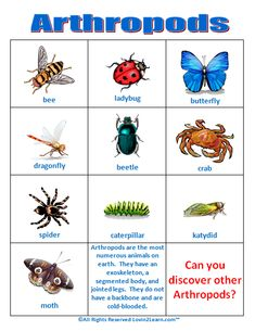 Arthropods Chart  www.loving2learn.com