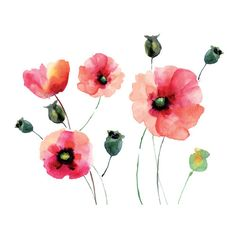 Found it at Wayfair.ca - Home Decor Line Watercolor Poppies Wall Decal
