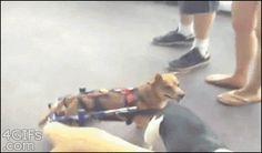 Discapacitados-perro-silla de ruedas