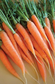 Fall Garden Carrots - mine are about ready to harvest!