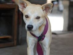 15. ASPINThe Aspin (Asong Pinoy) also falls under the category of low-maintenance dog breeds. As this breed sheds very minimally throughout the year, it does not require regular trips to the groomers. It also requires minimal space at home and minimal training and exercise. (Photo by Robert Fabros via Flickr Creative Commons)